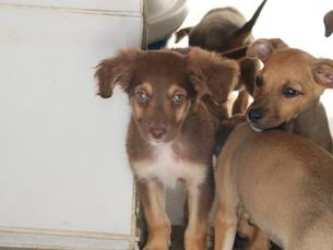 Com feira de adoção, CCZ de Caraguá fecha semana com 17 adoções de pets