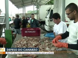 Período de defeso proíbe pesca de camarão na Costa Verde do Rio