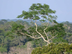 O ambíguo saldo ambiental do Brasil