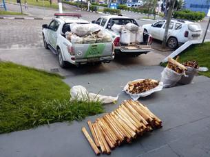 Polícia Ambiental apreende 1,5 tonelada de palmito em Caraguatatuba