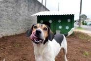 Animal comunitário: falta de organização entre cuidadores pode prejudicar a saúde