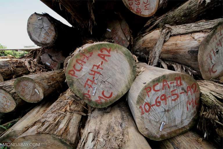As explorações legal e ilegal de madeira contribuem para as emissões de carbono não apenas por meio da perda da capacidade das árvores cortadas de estocar carbono, mas também pela fragmentação florestal. As bordas florestais liberam mais carbono do que a floresta não perturbada. Imagem de Rhett A. Butler/Mongabay