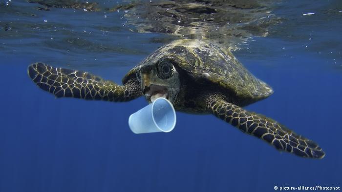 Animais marinhos como esta tartaruga muitas vezes ingerem lixo plástico