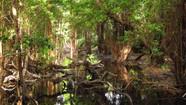 Deputada Márcia Lia apresenta PL de proteção aos manguezais