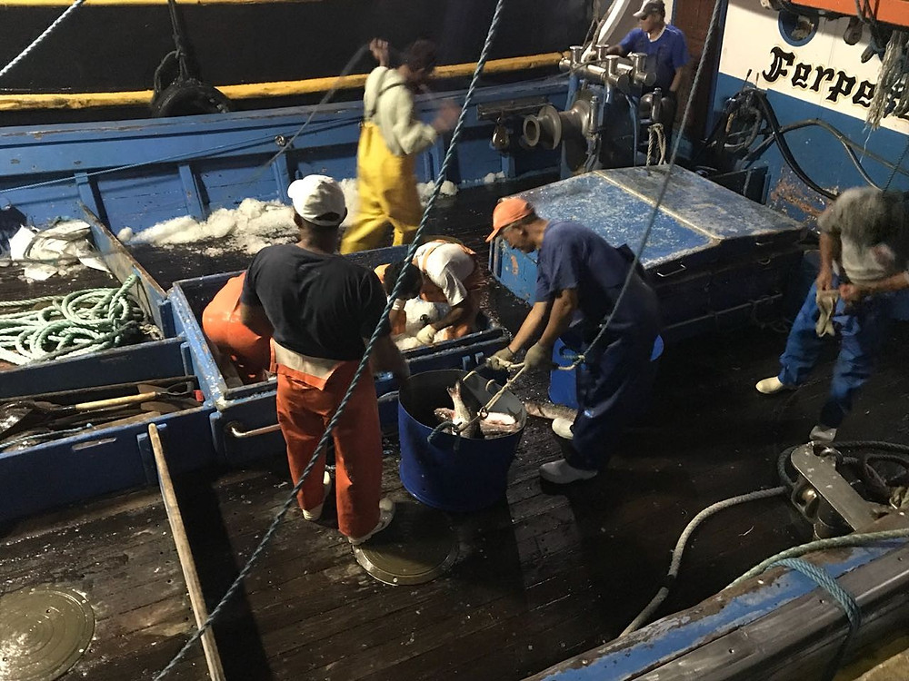 Peixe foi descarregado no píer da Vila na noite desta segunda-feira - Foto: Divulgação/PMI