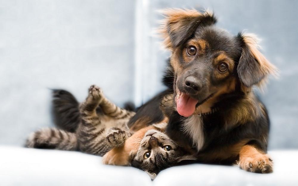 Gato e cachorro felizes e relaxados