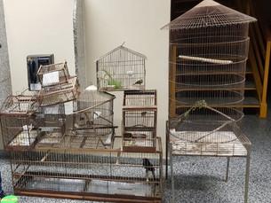 Polícia Civil apreende pássaros silvestres e materiais para caça em Paraty