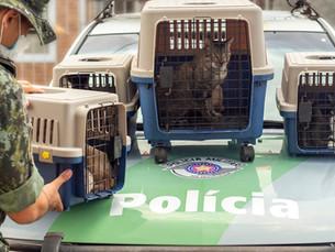 Idoso é multado em R$ 57 mil por maus tratos a gatos em Caraguatatuba