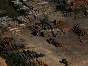 Dia do mau ambiente: o Brasil mergulha na mediocridade política