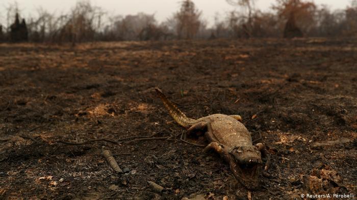 """""""O mais difícil é a todo momento encontrar cadáveres carbonizados"""", diz veterinária"""