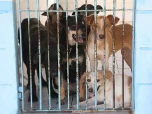 Egocentrismo é o inimigo das coisas bem feitas. Na proteção animal também.