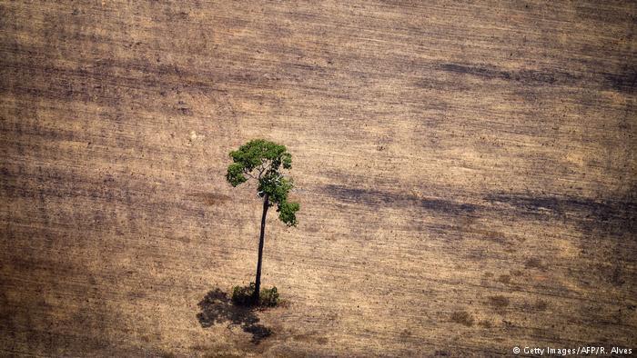 Árvore solitária em região desmatada na Amazônia