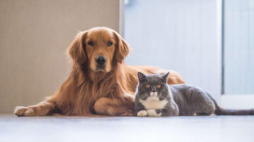 Março Amarelo Pet é um alerta para a conscientização e prevenção das doenças renais