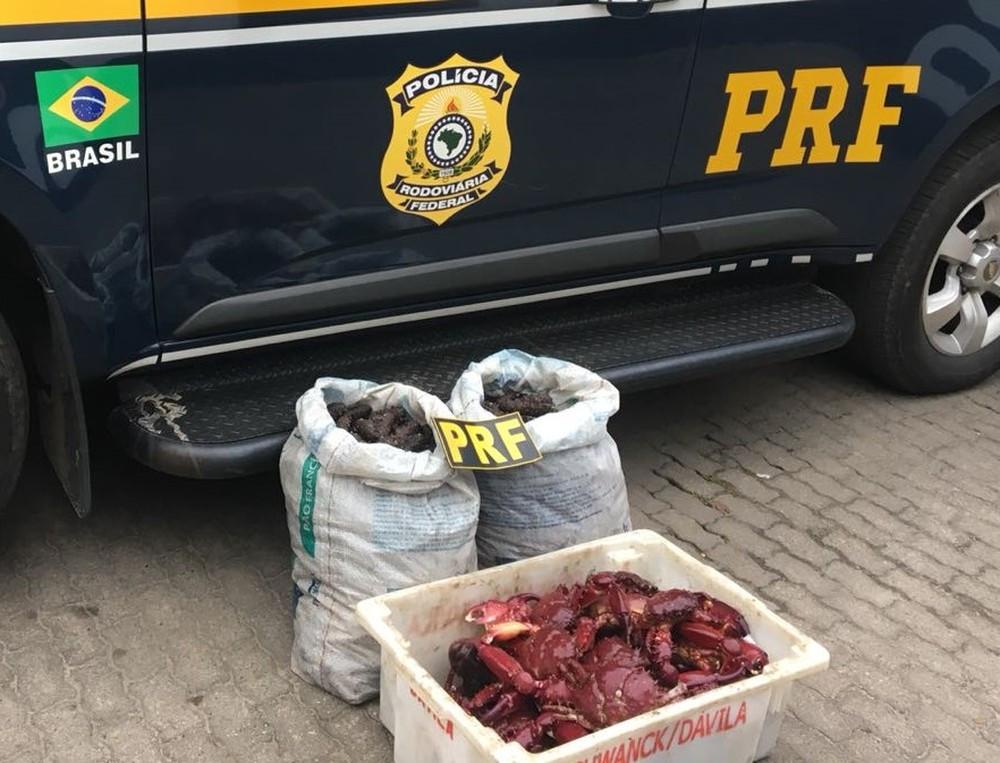 Animais são usados como iguaria gastronômica, mas extração é ilegal - Foto: Divulgação/Polícia Rodoviária Federal
