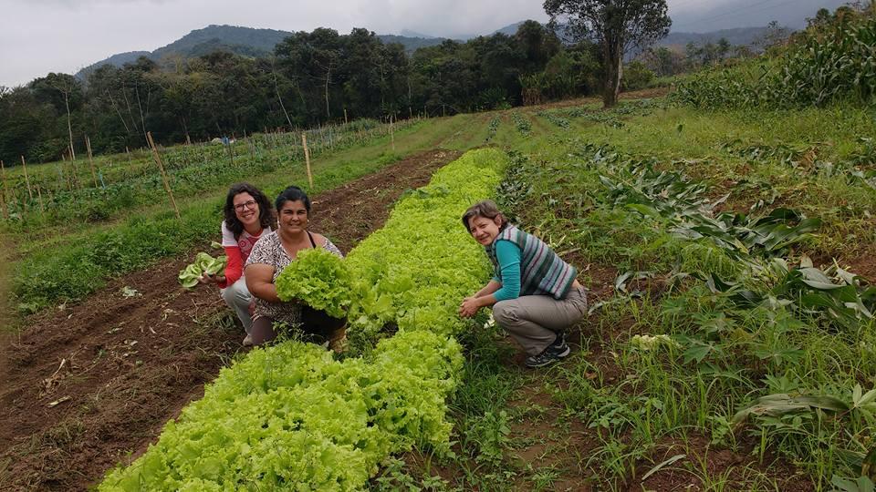 Ação é coordenada pelo departamento de pesquisas do setor de Fitotecnia de Ubatuba, além do apoio de órgãos estaduais - Foto: Divulgação