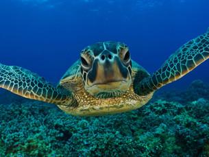 6ª Semana do Mar acontece em Ubatuba