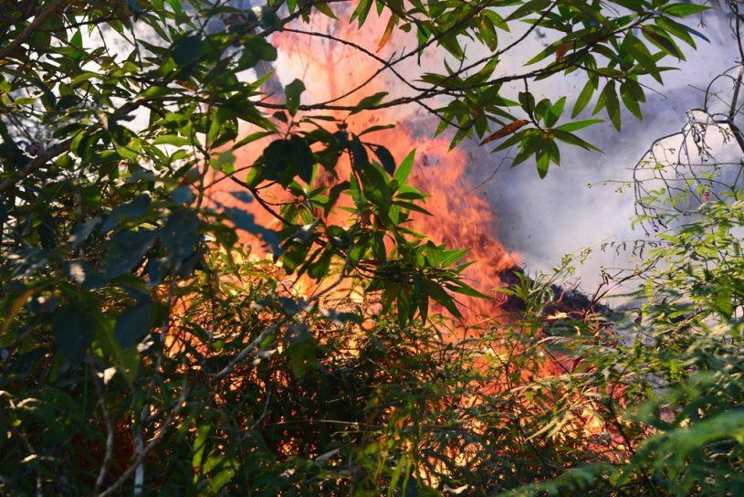 Mata pegando fogo. - Foto: Claudio Gomes/PMC