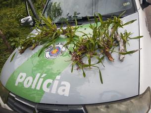 Homem é multado em R$ 6 mil por retirar orquídeas da Mata Atlântica em São Sebastião