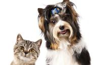 Cadastro para castração gratuita de cães e gatos continua em Ubatuba