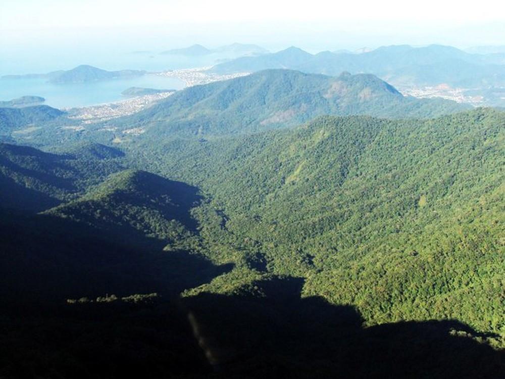 Parque Estadual da Serra do Mar é habitat de macacos (Foto: Parque Estadual da Serra do Mar/Divulgação)