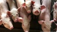 O coronavírus mudará nossa relação com os animais?