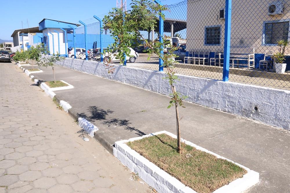 Mudas plantadas na calçada em frente à Secretaria de Serviços Públicos - Foto: Luiz Gava/PMC