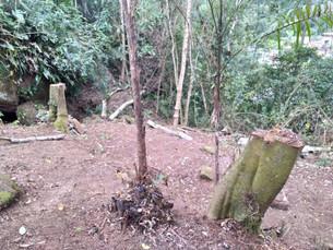 Denúncia leva PM a constatar desmatamento em área de proteção ambiental em Angra dos Reis