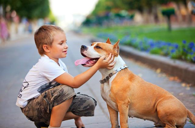 Todo pet precisa de carinho, atenção e cuidados básicos à espécie