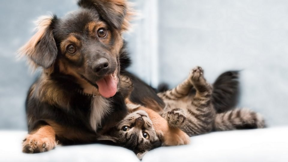 Cachorro e gato com carinha feliz