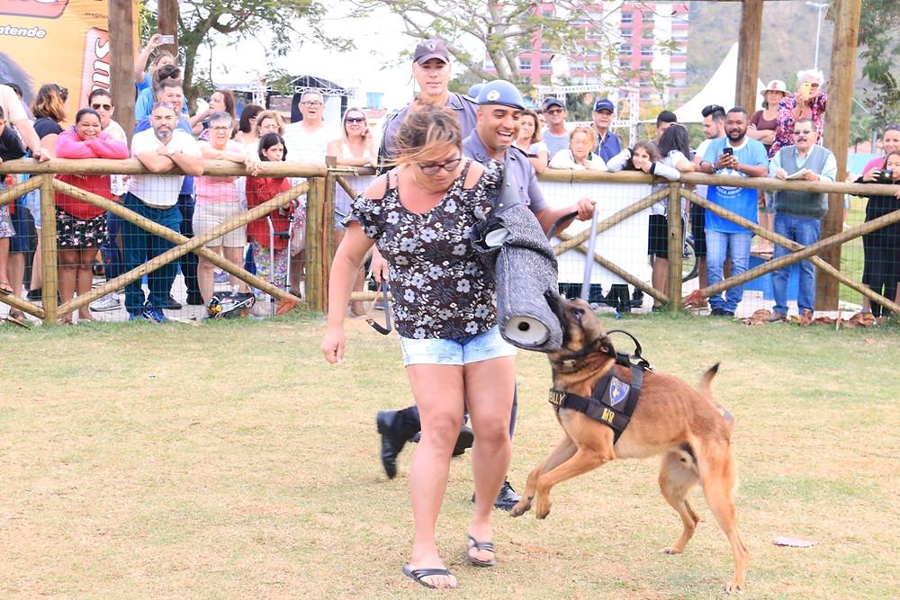 Cão policial Billy em ação - Foto: Divulgação/PMC