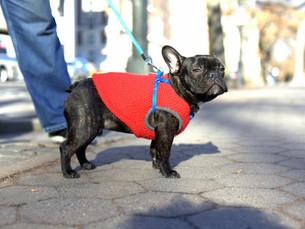 Para se vestir um animal tem que ter bom senso, mesmo em dias frios