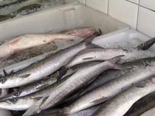 Falta de peixe afeta lucro das peixarias em Angra dos Reis