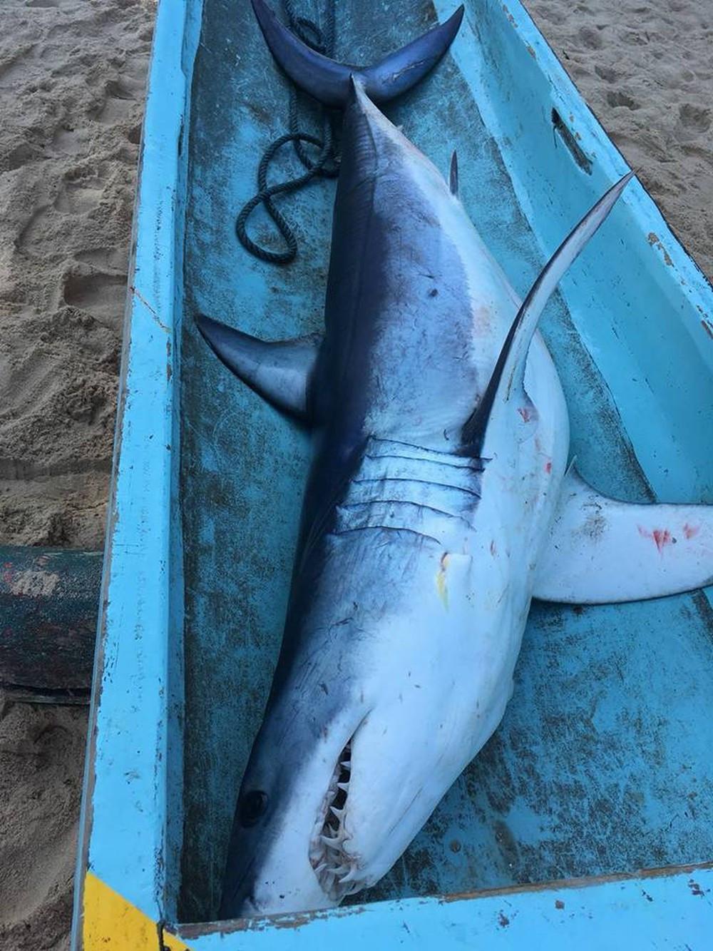 Tubarão é encontrado na praia de Toque Toque em São Sebastião (Foto: Arquivo Pessoal/ Márcio Silvestre)
