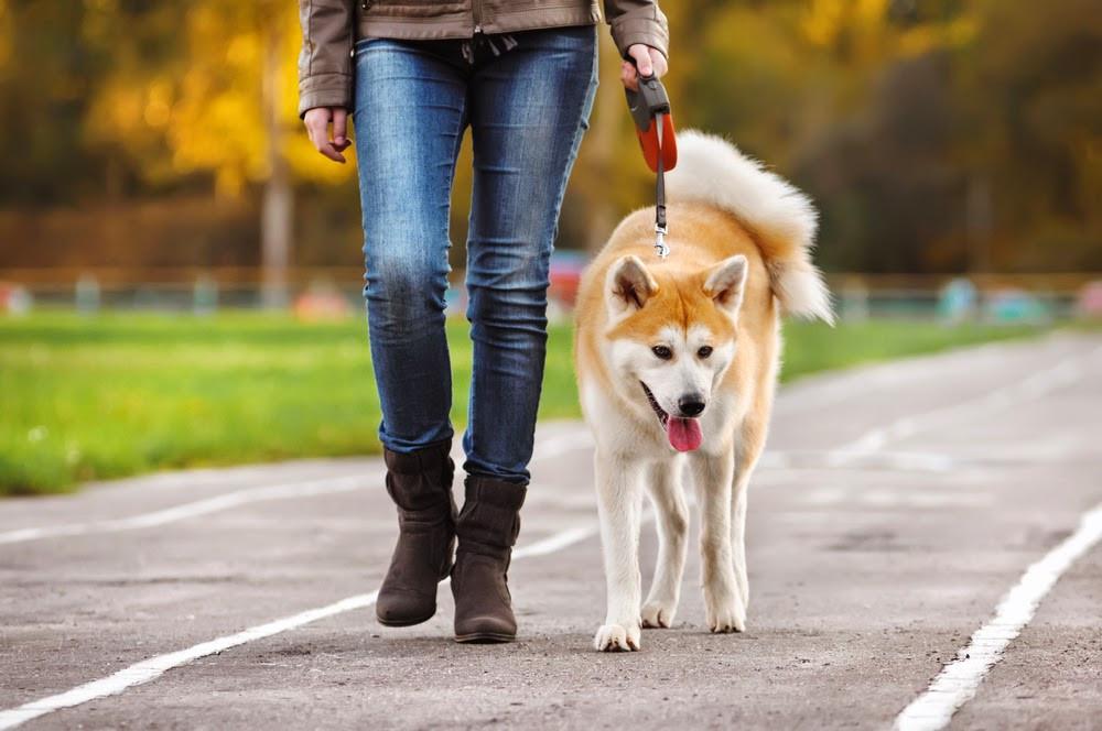 Nada é mais gratificante do que ter um animal de estimação. Mas é sempre melhor escolher o que mais se adapta ao seu estilo de vida