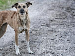 Encontrou um animal abandonado ou precisando de ajuda? Resgate.