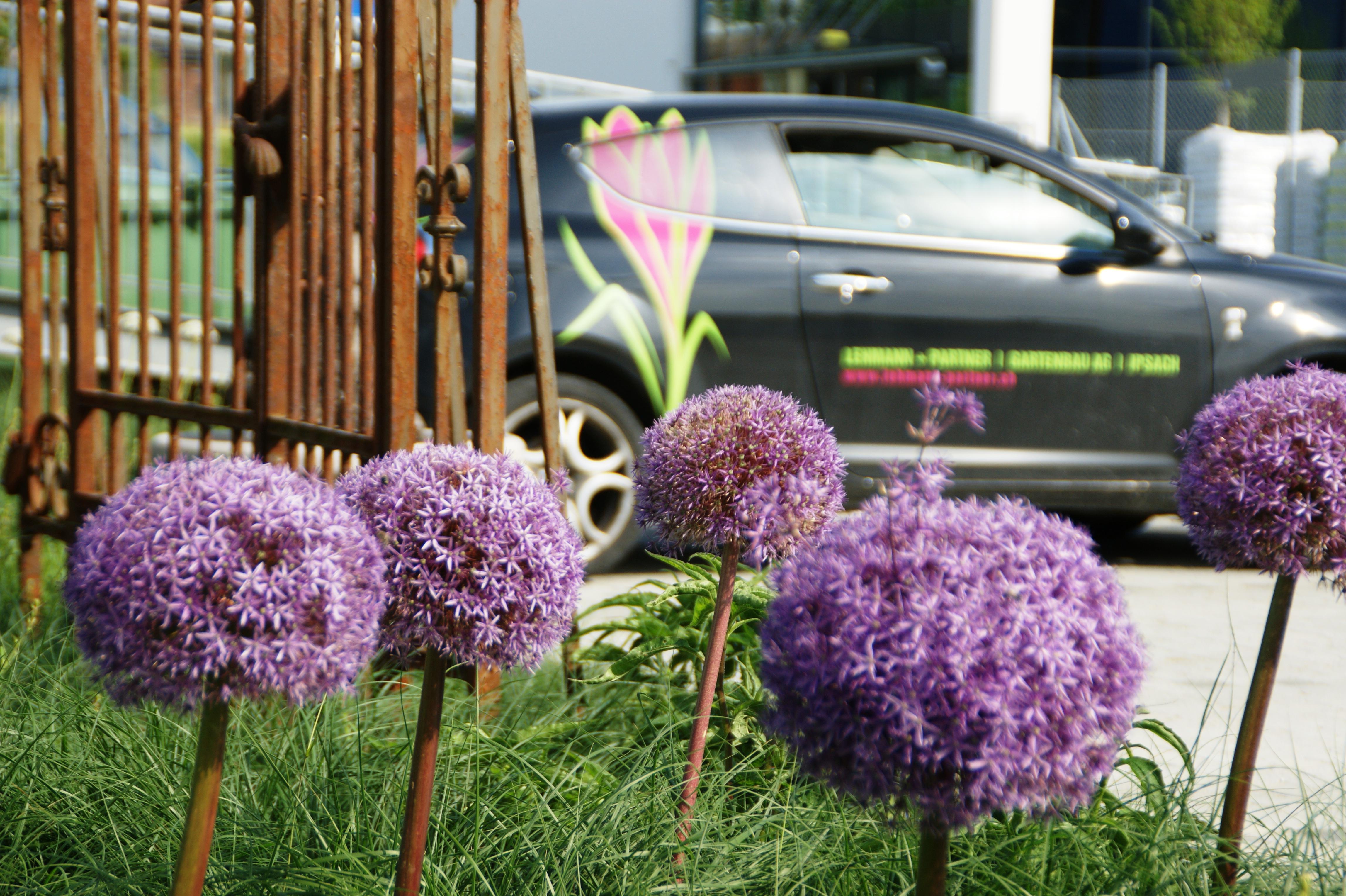 Ipsach Garten