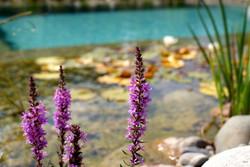 Gartenbau - Wasseranlage