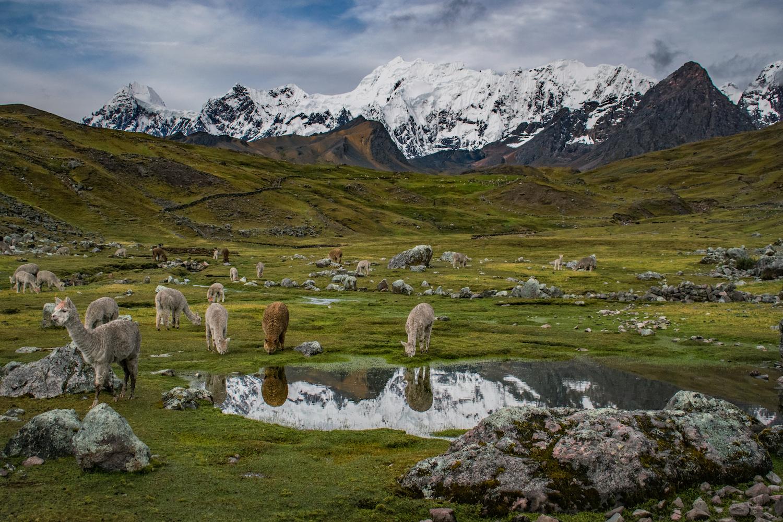 Andean landscape, Peru