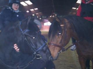Die zwei besten Pferdchen!!!