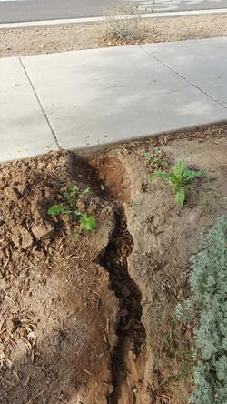 Irrigation Leak