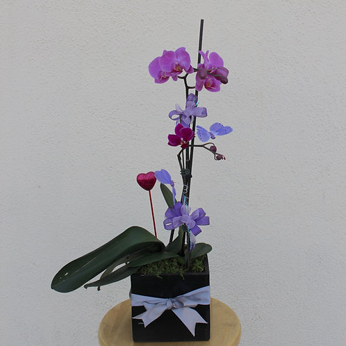 2 Orchids in a Box