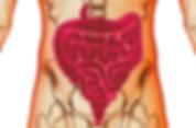 alimentation vivante bonheur en fleur ateliers healthy santé microbiote légumes fruits guérison maladie de crohn régénération coaching courses placards cru alimentation saine naturopathie psychomotricité psychomotricienne nutrition flore intestinale manon touati crohn sur la voie de la guérison maladie de crohn rch crohn rémission guérison coaching cru vivant guérir anticancer réf antioxydant, nature, huiles végétales, lentilles, sarrasin, sans gluten, sans lait animal, sans sucre, jeûne, jeûne intermittent crohn sur la voie de la guérison mici intestins singes fruits frugivore ben hicaubert natural hygie omnivore sucre bioiversité activités agricoles agriculture animaux jeûne jeûne intermittent jeûner autophagie autolyse perméabilité intestinale hyper perméabilté intestinale seignalet inflammation maladie chronique auto immune sclérose en plaque spondylarthrite ankylosante hypothyroidie hashimoto asthme cancer intestins microbiote flore intestinale bactéries