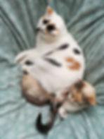alimentation vivante ateliers healthy santé microbiote légumes fruits guérison maladie de crohn régénération coaching courses placards cru alimentation saine naturopathie psychomotricité psychomotricienne nutrition flore intestinale manon touati crohn sur la voie de la guérison maladie de crohn rch crohn rémission guérison coaching cru vivant guérir anticancer réf antioxydant, nature, huiles végétales, lentilles, sarrasin, sans gluten, sans lait animal, sans sucre, jeûne, jeûne intermittent crohn sur la voie de la guérison mici intestins singes fruits frugivore ben hicaubert natural hygie omnivore sucre bioiversité activités agricoles agriculture animaux jeûne jeûne intermittent jeûner autophagie autolyse perméabilité intestinale hyper perméabilté intestinale seignalet inflammation maladie chronique auto immune sclérose en plaque spondylarthrite ankylosante hypothyroidie hashimoto asthme cancer intestins microbiote flore intestinale bactéries système immunitaire bonheur en fleur