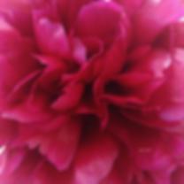 bonheur en fleur huiles essentielles manon touati iris haesendonck aromathérapie aromachologie crohn maladie de crohn rch rémission naturopathie inflammation émotions guérison guérir alimentation saine intestins microbiote cerveau psychomotricienne naturopathe psychomotricité perméabilité intestinale mici maladie chronique inflammatoire de l'intestin fleur plante légumes