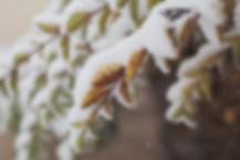 manon touati bonheur en fleur Iris Haesendonck stress aromathérapie huiles essentielles anti stress guérison régénération maladies auto immunes maladie de crohn rch sep sclérose en plaque autisme psychomotricité psychomotricienne naturopathie naturopathe coaching holistique thérapeute holistique régénération thierry casasnovas alimentation saine guérir