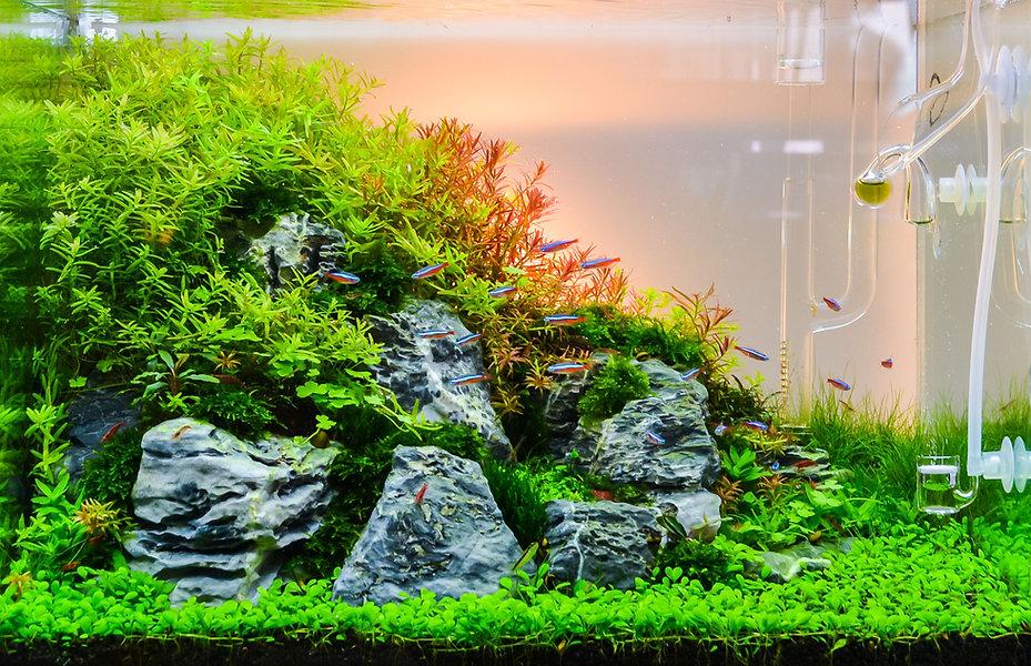 Nature Slope Aquarium with CO2