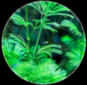 palm plants circle small.png