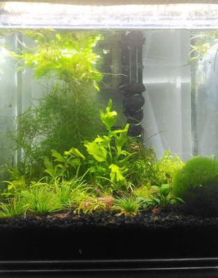 Nikki's Home Aquarium