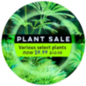 abc-plant-sale-february-2020-landing-pag