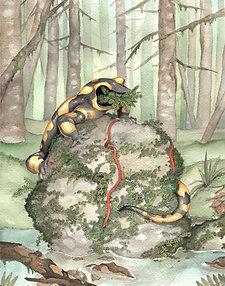 11x17 Print - Faceless Salamander